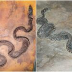 This 48-Million-Year-Old Fossil Has an Insect Inside a Lizard Inside a Snake