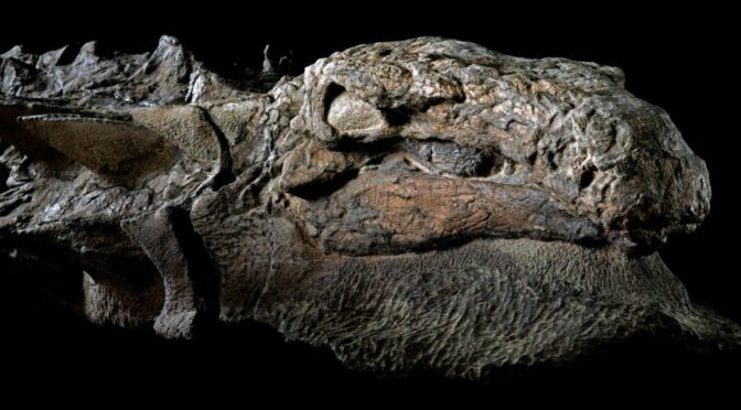 The Most Famous Fossils Ever Discovered
