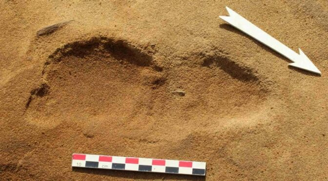 Ancient footprints show Neanderthals may have been taller than thought