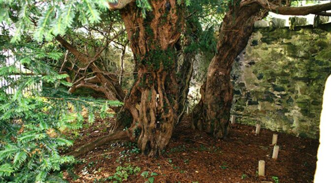Brainless Tourists Slaughter 5,000-Year-Old Sacred Scottish Tree