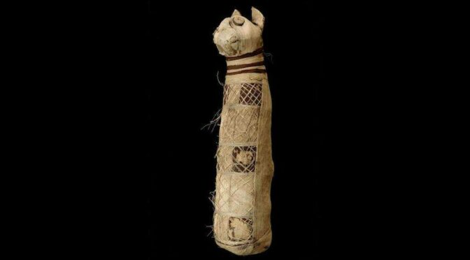 Archaeologists Discover Remains Of Three Different Cats Inside Ancient Egyptian Mummy