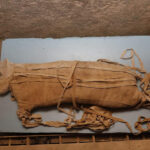 Two mummified lions, dating back about 2,600 years, have been discovered in a tomb full of cat statues and cat mummies in Saqqara, the Egyptian Ministry of Antiquities announced today (Nov. 23) at a press conference.