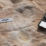 Human footprints dated to roughly 85,000 years ago revealed in Saudi Arabia