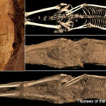 Scans Reveal Archangel Michael Tattoo on Mummy's Thigh