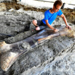 Massive, 1,100-Pound Dinosaur Bone Unearthed in France