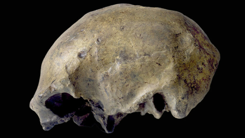 Homo erectus' last known appearance dates to roughly 117,000 years ago