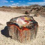 Petrified opal tree trunk situated in Arizona it's about 225 million years old