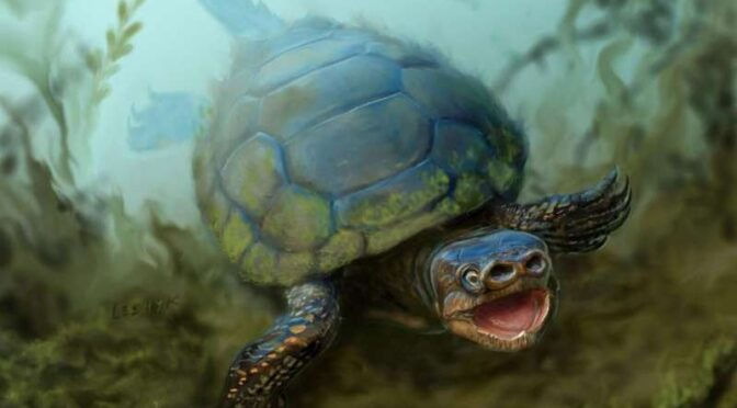 Archaeologists discover fossil of ancient turtle species that never grew a shell