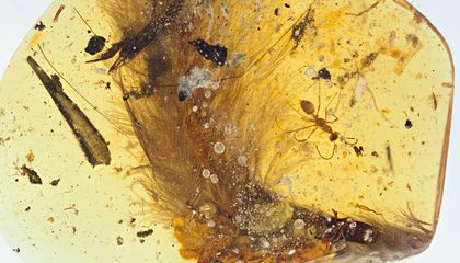 This 99-Million-Year-Old Dinosaur Tail Trapped in Amber Hints at Feather Evolution