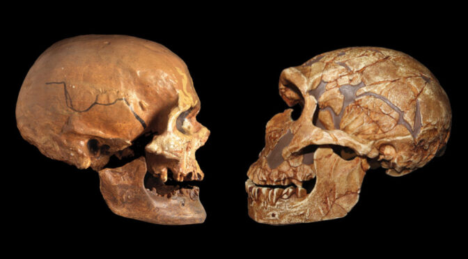 Modern Africans and Europeans may have more Neanderthal ancestry than previously thought