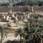 Extinct date palms grown from 2000-year-old seeds found near Jerusalem