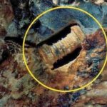 Could this 300 million-year-old 'screw' be proof of aliens?