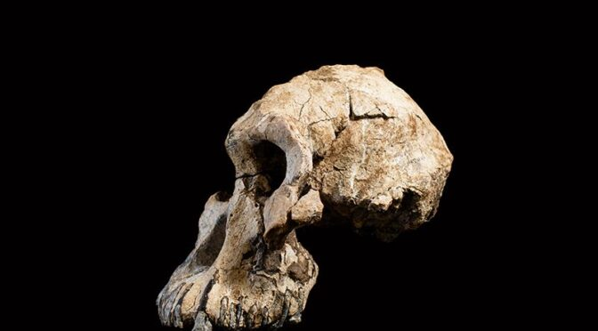Rare 3.8-million-year-old skull recasts origins of iconic 'Lucy' fossil