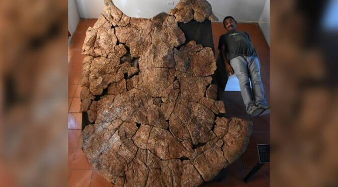 Turtle fossil the size of a car unearthed shows signs of ancient croc battle