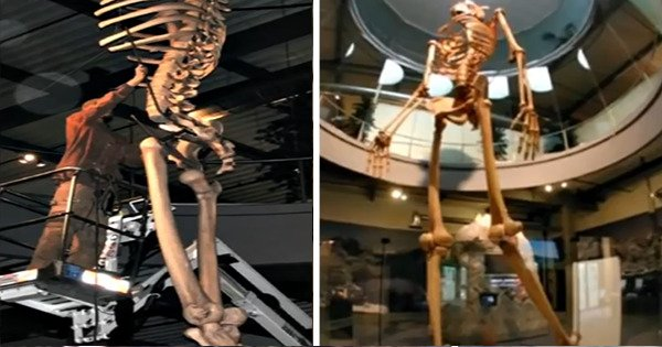 Ecuador Expose the Skeletons of an Ancient Race of Giant Humans – 7 Times Bigger Than Modern Humans