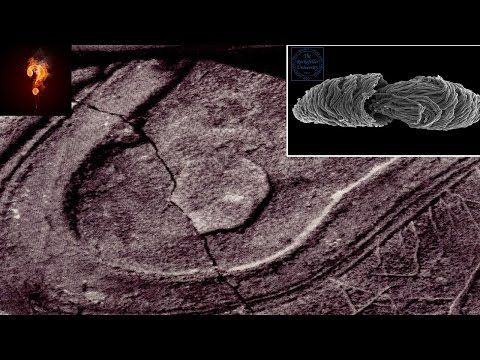 200 million-year-old shoe print found on a lump of coal