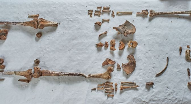 Bones hidden in church revealed to be remains of one of England's earliest saints