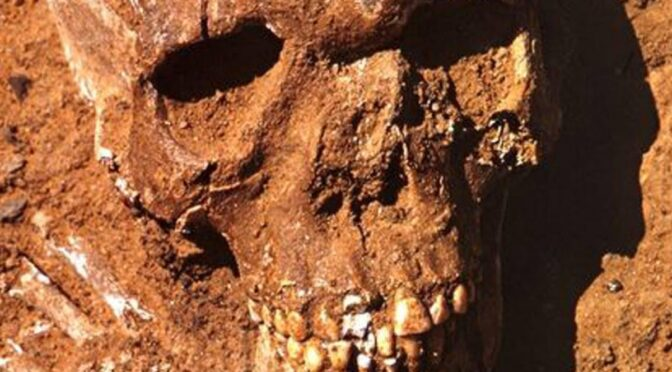 Skeletons of war dead from 11,000 BC go on show at the British Museum