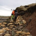 "Scottish storms unearth 1,500-year-old Viking-era cemetery Scottish Islands were once inhabited by native Picts people only, a Celtic-language speaking group, similar to the natives that live on what is now Scotland.  Some powerful storms on the Orkney Islands in Scotland have now unearthed ancient human bones in a Pictish and Viking cemetery dated back to about 1,500 years ago. Volunteers are now placing sandbags and clay around, in order to protect the damage to the ancient Newark Bay cemetery on Orkney's largest island. The site is dating back to the middle of the sixth century when the Orkney Islands were occupied by native Pictish people. Picts or Norse? The cemetery was used for about 1,000 years, and numerous burials from the ninth to the 15th century were Norsemen or Vikings who had seized the Orkney Islands from the Picts. Now, storm waves are destroying the low cliff where the ancient site is located, Peter Higgins from the Orkney Research Center for Archaeology (ORCA), said. ""Every time we have a storm with a bit of a south-easterly [wind], it really gets in there and actively erodes what is just soft sandstone,"" Higgins explained. Approximately 250 skeletons were taken out of the cemetery about 50 years ago, but researchers do not know how far the site extends from the beach. They believe that hundreds of Pictish and Norse bodies are still buried there. ""The local residents and the landowner have been quite concerned about what's left of the cemetery being eroded by the sea,"" Higgins said. Uncovered bones are usually either coated with clay to protect them or removed from the site after their positions are thoroughly labeled, so it is rather unusual for bones to end up on the beach, he explained. Researchers do not know yet of the exposed bones belong to Picts or Vikings, as no burial objects or funeral clothes were spotted, and the bodies were buried four of five layers under the surface. Cultural Transition Historians claim that the first Norse immigrants to the Orkney Islands established there in the late eighth century, leaving a rising new monarchy in Norway. They used the Orkney Islands to begin their own voyages and Viking raids, and ultimately, all the islands were ruled by the Norse, according to The Scotsman. The relationship between the Picts and the Norse on the Orkney Islands is highly argued by scholars. They cannot know for sure whether the Norse took over by force, or were settlers who traded and entered marriage with the Picts. However, now, the ancient cemetery at Newark Bay may help researchers answer their questions. ""The Orkney Islands were Pictish, and then they became Norse,"" Higgins said. ""We're not really clear how that transition happened, whether it was an invasion, or people lived together. This is one of the few opportunities we've got to investigate that."" A part of the scientific work on the remains would require testing genetic material from the ancient bones, which might demonstrate that some people living on the Orkney Islands today are successors of people who lived there more than 1,000 years ago. ""We're fairly confident that we're going to find that some local residents are related to people in the cemetery,"" Higgins said."