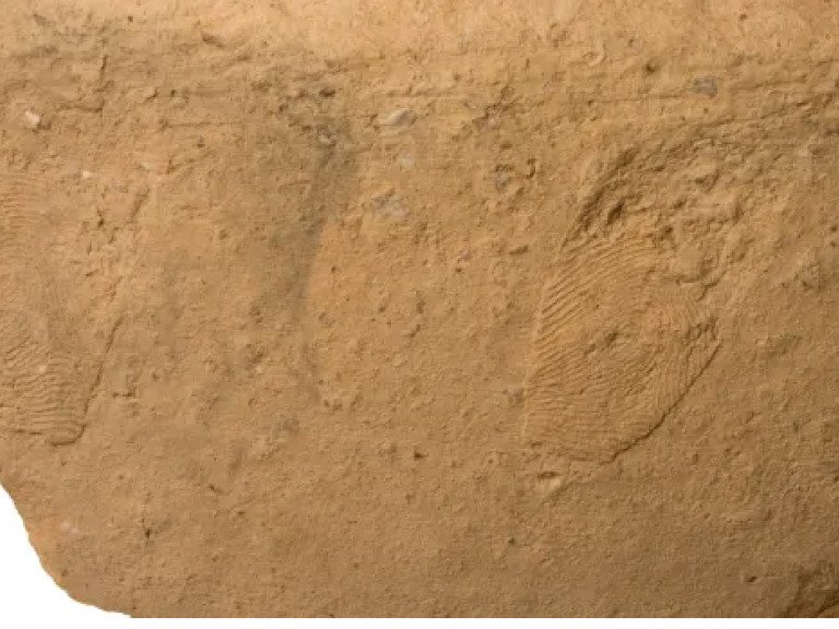 Fingerprints on Early Bronze Age Pottery Studied in Israel