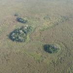 Early Agricultural Hotspot Found in Amazonia