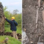 Uprooted tree reveals a violent death from 1,000 years ago