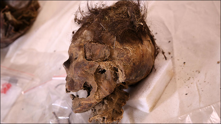 The Mongolian woman (pictured) is believed to have been aged between 30 and 40 when she died. Some skin and hair can be seen on her remains, which were wrapped in felt.