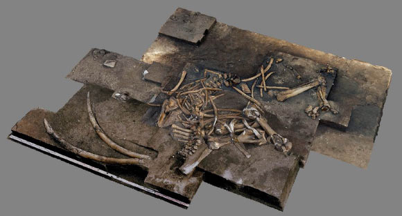 Archaeologists discover almost complete 300,000-year-old elephant skeleton