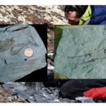 600 million-year-old fossils of tiny humanoids found in Antarctica