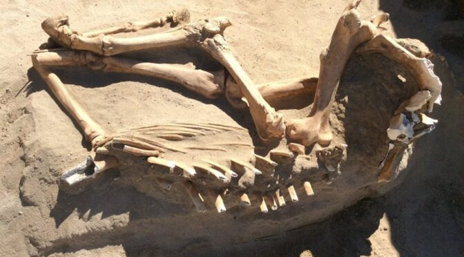 16,000-yr-old Ice Age Horse Found During Utah Family's Backyard Renovation
