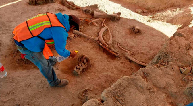 Skeletons of over 60 mammoths found under-construction site of future Mexico airport
