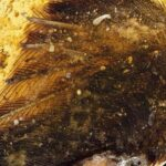99 million year rare dinosaur-era bird wings found trapped in amber