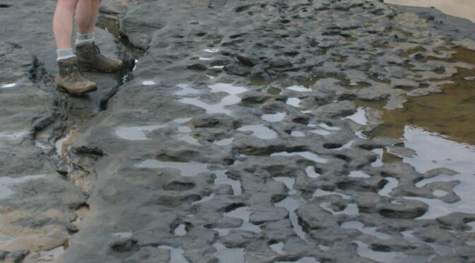 900,000-year-old footprints of earliest northern Europeans discovered