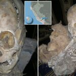 Researchers in Bolivia find two skeletons with abnormally elongated skulls