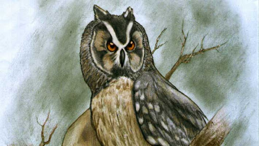 Fossil of giant owl that lived 40,000 years ago in Ecuador found