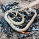 15,000 Years Ago, Humans in Israel Ate Snakes and Lizards