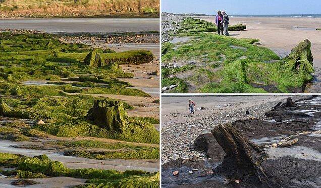 North sea reveals forest buried for 7,000 years and human footprints