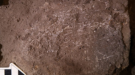 200,000-Year-Old Mattress Analyzed in South Africa