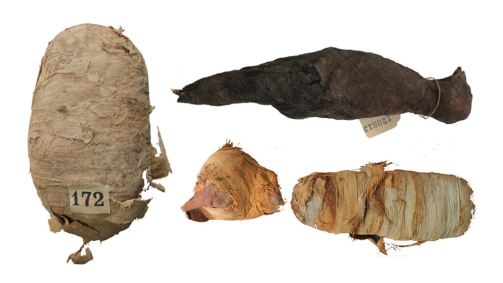 Ancient Egyptian Animal Mummies Viewed with High-Tech Tools