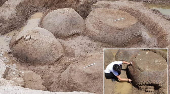 Argentinian farmer discovered a prehistoric giant armadillo shell