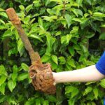 10-Year-Old Boy Finds Centuries-Old Sword in Northern Ireland