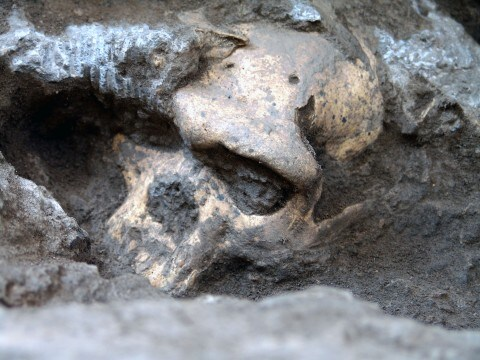1.8-million-year-old skull gives a glimpse of our evolution