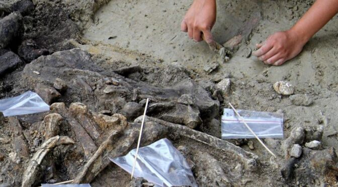 700,000-Year-Old Stone Tools Point to Mysterious Human Relative