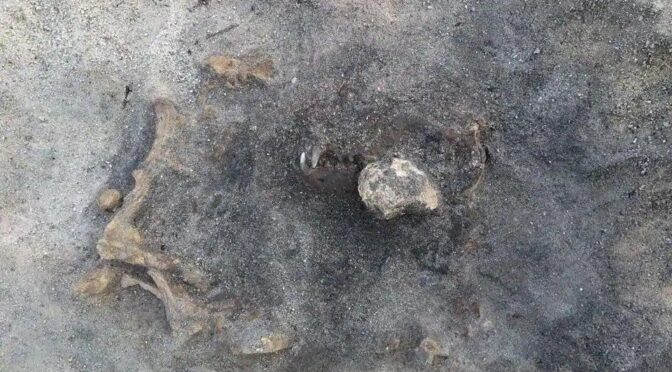 8,400 years old Dog Remain found at Stone Age burial site in Sweden