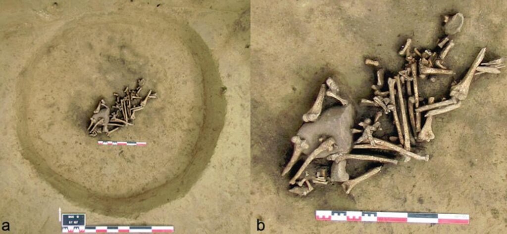 Pit of Amputated arms in France from 6,000 years ago suggest war and trophy taking