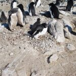 Scientist Unearths a Colony of Mummified Penguins in Antarctica