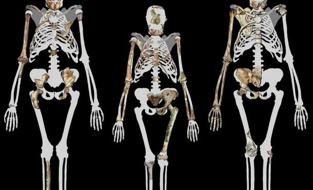 2-Million-Year-Old Human Ancestor Preserved Tissue Maybe the oldest skin ever discovered