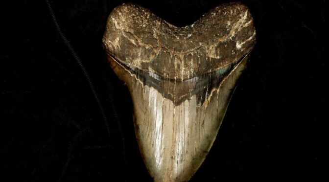 Unexpected: Scientists Find the Fossil of a 91-Million-Year-Old Shark in Kansas