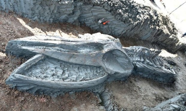 Thailand: Rare 5,000 Years old whale skeleton discovered