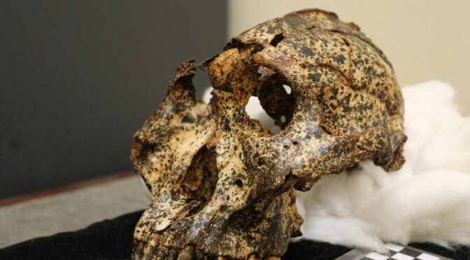 Skull of two-million-year-old human 'cousin' unearthed in South Africa